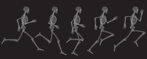 x-ray weergave van de lopende cyclus van menselijk skelet vector tekening