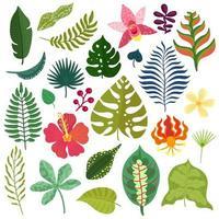 tropische planten elementen instellen vectorillustratie vector