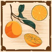 Unieke Vintage Citrus Illustraties Vectoren