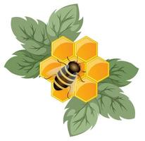 vector afbeelding van een honingraat als een concept van een bloem die een honingplant is