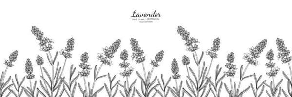 naadloze patroon lavendel bloem en blad hand getekende botanische illustratie met lijntekeningen vector
