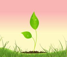 Lente Plant groeit in een tuin