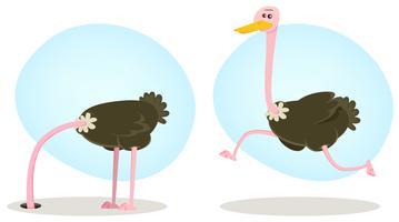 Struisvogel lopend en verbergend hoofd