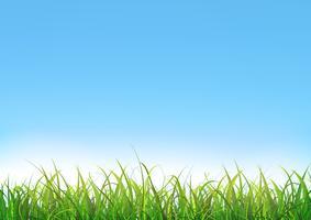 Blauwe hemelachtergrond met groen gras