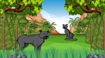zwarte panter in bosscène met veel bomen vector