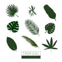 Vector tropische bladeren isoleren op wit.