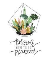 Hand getrokken bevatte tropische kamerplanten vector