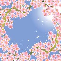 Roze kersenbloesem bloem achtergrond