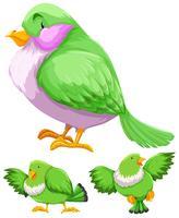 Groene vogel in drie acties