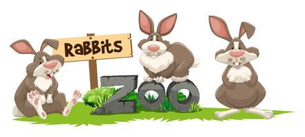 Drie konijnen in het dierentuinenteken vector