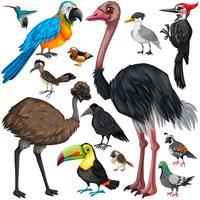Verschillende soorten wilde vogels vector