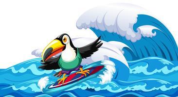 Toucan die op grote golf surfen
