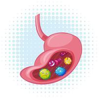 Bacteriën in de menselijke maag vector