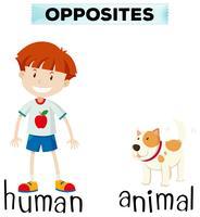 Tegenovergestelde woorden voor mens en dier