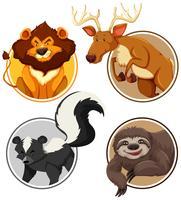 Set van wilde dieren op cirkel sjabloon vector