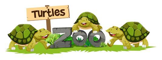 Schildpadden in de dierentuin vector