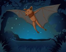Vleermuis vliegt in het donker