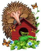 Hedghog over het vogelhuisje