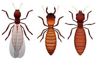 Verschillende stadia van een termiet