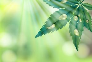 Een natuurlijke groene achtergrond met blad vector
