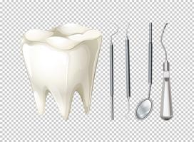 Tand en tandmateriaal vector