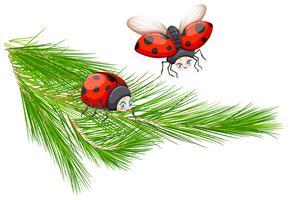 Lieveheersbeestje bij de tak van de pijnboomboom