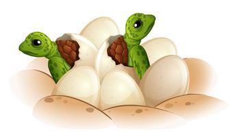 Schildpad die het ei uitbroeden