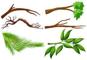 Een set van boomtakken