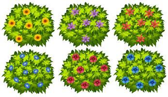 Groene struik met kleurrijke bloemen vector