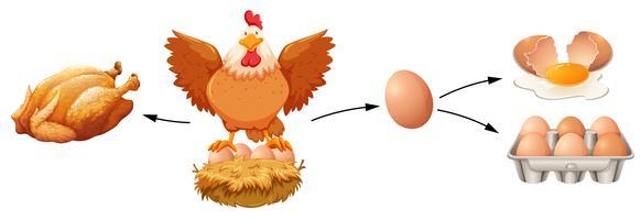 Kippenproduct op witte achtergrond vector