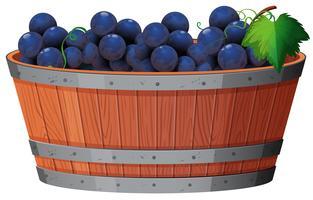 Een wijnstok van druif in emmer