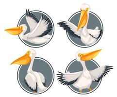 Een pelikaan op stickermalplaatje