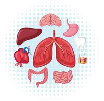Menselijke organen op poster vector