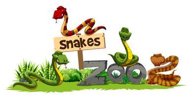 Vier slangen in de dierentuin
