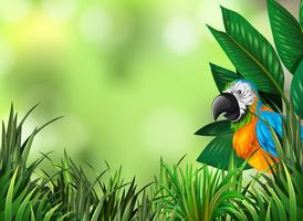 Papegaai op de groene aardachtergrond