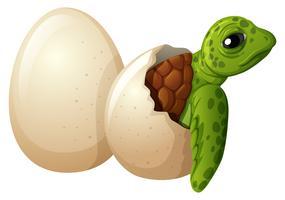 Baby-schildpad uitkomend ei vector