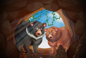 Twee beren in een grot vector