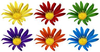 Bloemen in zes verschillende kleuren