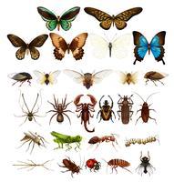 Wilde insecten in verschillende soorten