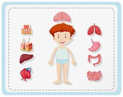 Jongen en verschillende delen van het lichaam