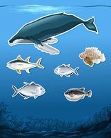 Veel vissen onderwaterthema vector