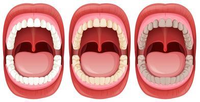 Een set van menselijke mondanatomie vector