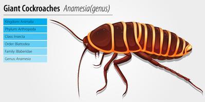 Gigantische kakkerlak - Anamesia vector
