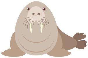 Walrus op witte achtergrond vector