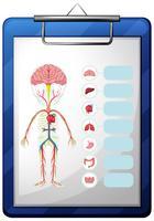 Menselijke organen op blauw bord