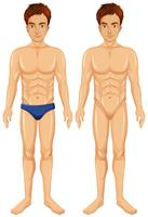 Een vector van mannelijk lichaam