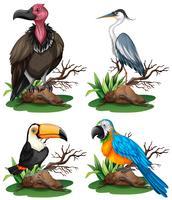 Vier verschillende soorten wilde vogels