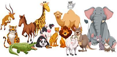 Verschillende soorten wilde dieren vector