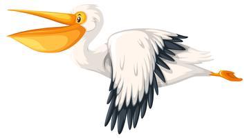 Een pelikaan die op witte achtergrond vliegt
