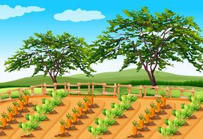 Plantaardige landbouw in het landelijk gebied vector